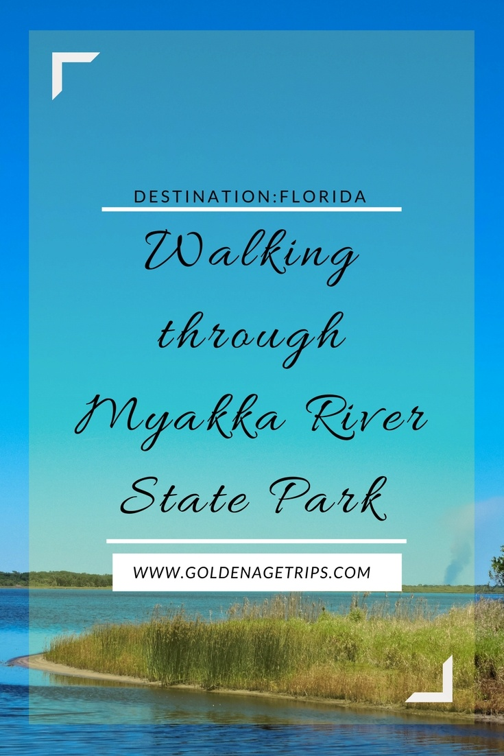 Just about one hour from Tampa, FL there is a canopy walkway, birdwalk, and an abundance of wildlife. Go with us while we walk through Myakka State Park.