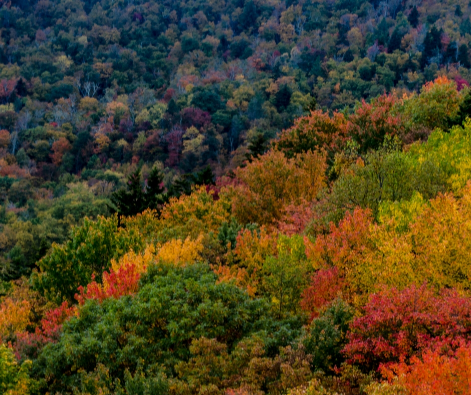 asheville fall foliage