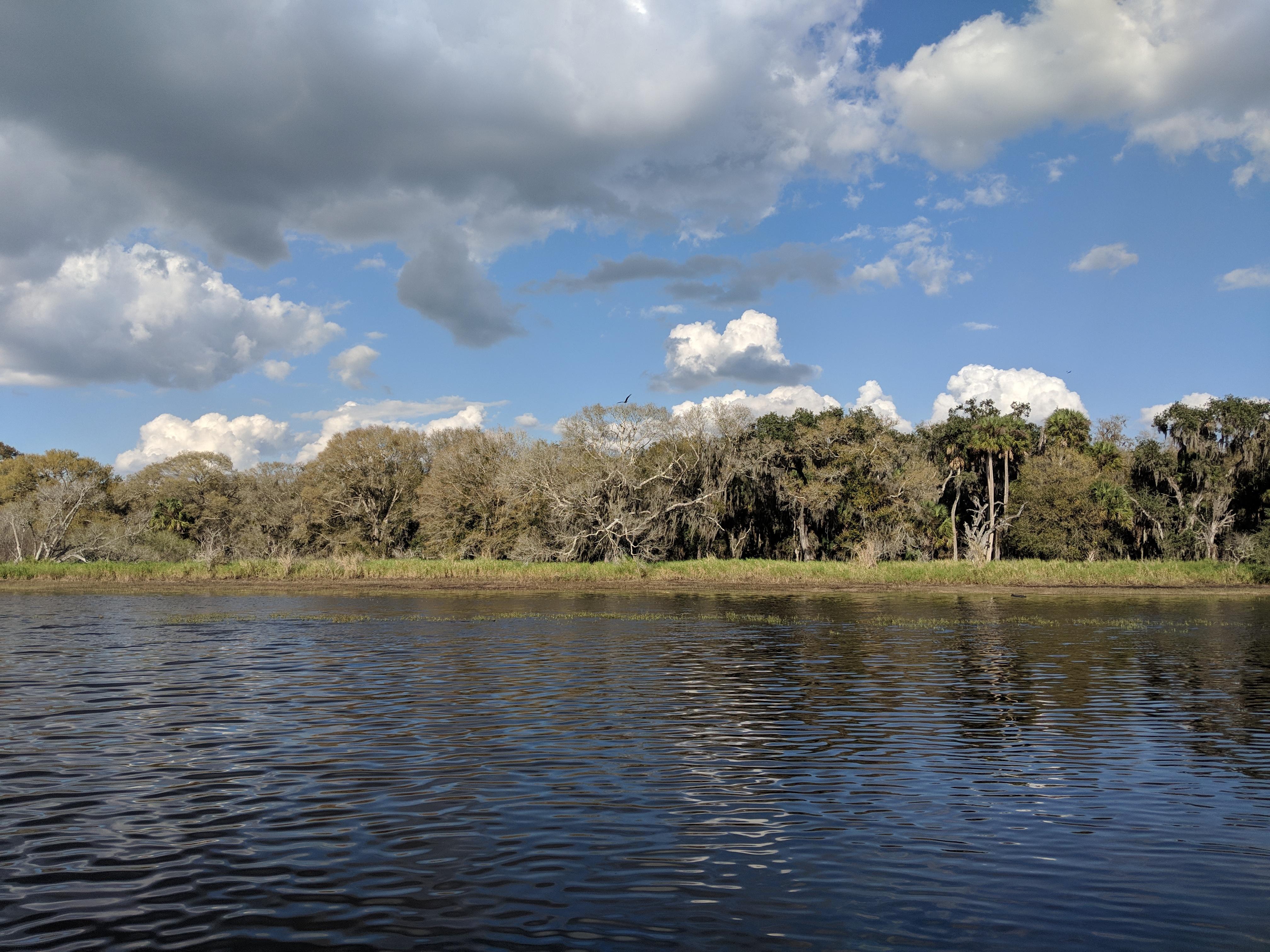 Myakka River State Park from Myakka River Boat Tours