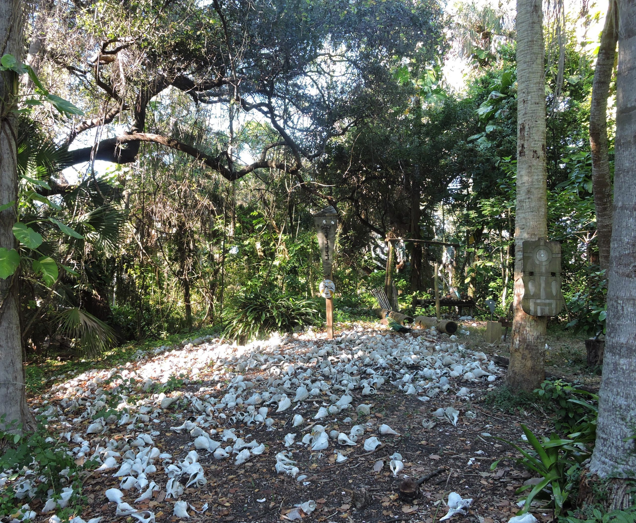 Tocobaga Indian Mound Anderson Narvaez Mound